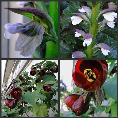Flowers Carmel